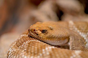 répulsif serpent